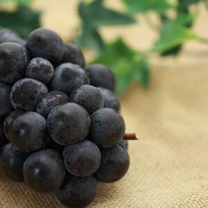 スチューベン 6房 ぶどう ブドウ 葡萄 ギフト用 贈答用 家庭用 お歳暮 産直 産地直送 豊洲
