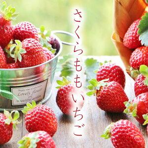 さくらももいちご 徳島県 20〜28粒 ブランドイチゴ 苺 フルーツ 果物 ギフト用 家庭用 お歳暮 贈答用 産直 産地直送 豊洲 内祝い お取り寄せグルメ