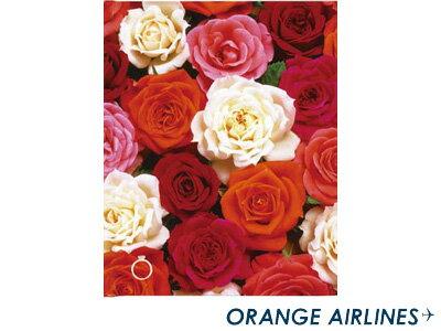オレンジエアラインORANGEAIRLINES/フリー台紙アルバム(M)RoseBloomsローズブルーム(AL-092)