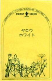 ヤロウ・ホワイト/ハーブの種【ネコポス対応可能】
