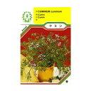 ハーブ・西洋野菜の種 「クミン」