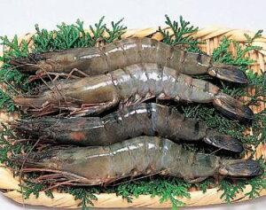 聖なる海老 (ブラックタイガー) オーストラリア産 1kg(31〜40尾) 刺し身にも最適 (nh218247) 有頭殻つき