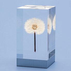 【8/22 19時より!最大1,000円OFF!8/26 16:59まで】【ポイント2倍!】TAKAO INOUE(タカオ イノウエ)OLED TAMPOPO Light(タンポポ)[996TMP-OEL-01]