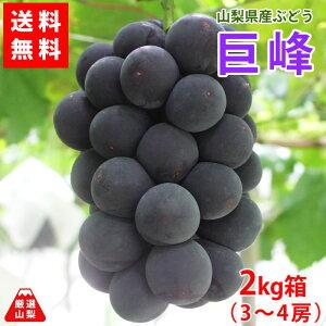 【送料無料】巨峰 2kg箱 (3〜4房) 山梨県産 ぶどう 大粒 黒ブドウ 葡萄の王様 大人気