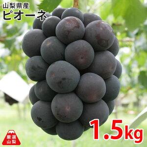 【送料無料】ピオーネ 1.5kg箱 山梨県産 ぶどう 大粒 黒ブドウ リピーター続出 香りが良く 肉厚