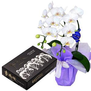ミディ胡蝶蘭 2本立ち 白色 玉初堂 香樹林 大バラ #211 線香セット