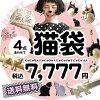 30개 한정 판매!고양이를 좋아하는 사람 스탭이 고양이를 좋아하는 사람씨에게 보내는 고양이를 좋아하는 사람씨를 위한 고양이의 복주머니 「묘대」! 고양이고양이 캣 CAT 애니멀 동물 잡화 소품 가방가방 가방 지갑 워렛트속스 양말 복주머니 고양이무늬◆니응냥냥 전신 고양이 투성이 7점 세트