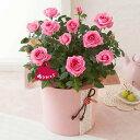 【母の日フラワーギフト】鉢植え「ミニバラ セントラルキューティー」