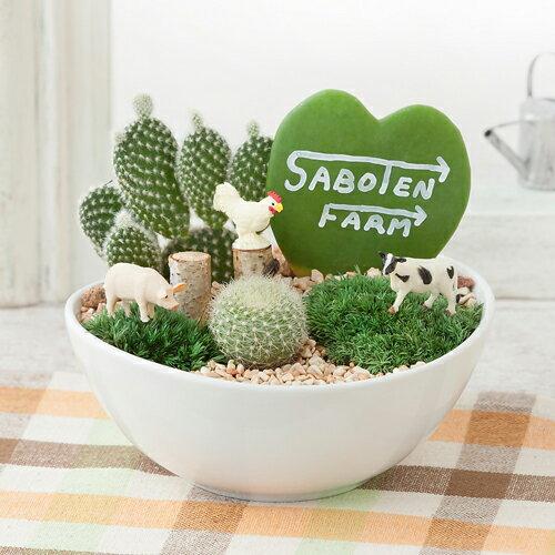 【鉢植え・花鉢・寄せ植え】「サボテン ファーム」