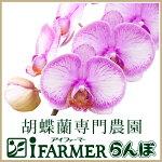 胡蝶蘭専門農園 iファーマーらんぼ