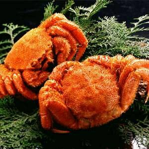 【北海道産】ボイル毛ガニ姿(約650g×2尾) フード・ドリンク・スイーツ 魚介類 カニ その他のカニ レビュー投稿で次回使える2000円クーポン全員にプレゼント