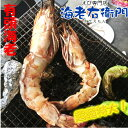 超超特大!天然有頭シータイガーえび 1.5kg 8尾サイズ 特大 ゆうとう 海老 エビ 大きい 冷凍えび スリランカ …