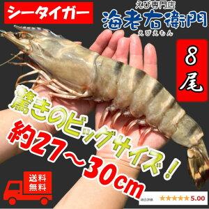 超超特大!天然有頭シータイガーえび 1.5kg 8尾サイズ 特大 ゆうとう 海老 エビ 大きい 冷凍えび スリランカ バーベキュー エビフライ 有頭エビ