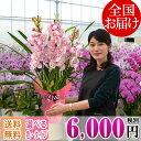 シンビジューム(シンビジウム) 3本立ち〜 6,000円(税別) 送料無料【冬の洋蘭 洋ラン らん お祝い 花 フラワーギフト …