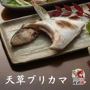 天草ブリカマ1個(冷凍)塩焼き 鮮魚 煮付け 鰤 お取り寄せ ぶり 通販 海鮮 グルメ
