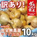 【数量限定!】訳あり(規格外品)『完全無農薬!こだわり農法のサラダたまねぎ:たっぷり10kg』熊本県天草産!自家製有機肥料のみで作られた美味しいサラダ玉ねぎ詰め...