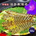 熊本県天草産 幸福堂ブランド 活き車海老海老王500g(17匹前後)