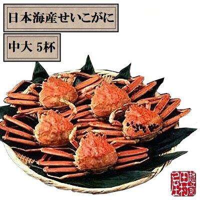 商品日本海せいこがに中大×5-2