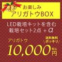 【すぐ使える500円OFFクーポン配布〜1/4(木)13時迄】期間限定販売 お楽しみありがとうBOX LED栽培キット 栽培セット2種+オーガニックの種