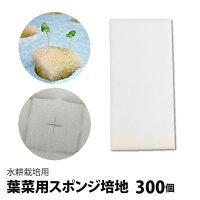 水耕栽培用、葉菜用培地(スポンジ)