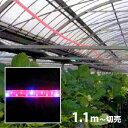 植物育成 LED ロープライト [赤・青](防滴)・切売り ※電源セット別売 ■直送■