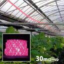 植物育成 LED ロープライト[赤・青] 防滴 30m ロール売り ■直送■ 水耕栽培 ガーデニング