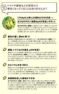 水耕栽培液体肥料おうちのやさいプレミアム肥料