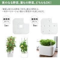 水耕栽培キットホームハイポニカMASUCOマスコ