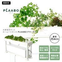 水耕栽培キットホームハイポニカPLAABOプラーボ