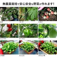 家庭菜園プランター栽培セット(水耕栽培養液栽培)