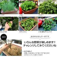 家庭菜園プランター栽培セット水耕栽培養液栽培