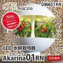 観葉植物 水耕栽培 インテリア LED Akarina01 (アカリーナ) OMA01 おしゃれな水耕栽培