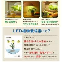 LED水耕栽培Akarina01(アカリーナ)OMA01