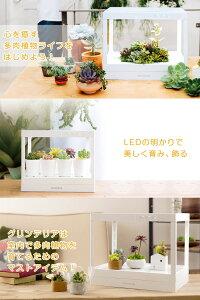 LEDプランターグリンテリア多肉植物栽培キットディアゴスティーニ