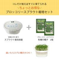 ブロッコリースプラウト栽培セット