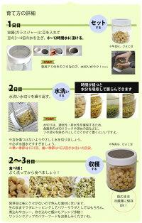 プチ栽培セットオーガニックの種から育てる発芽豆栽培キット