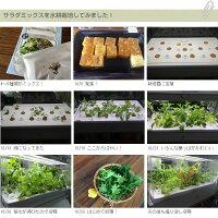 有機種子サラダミックス<ベビーリーフ>