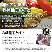 有機種子オーガニックの種