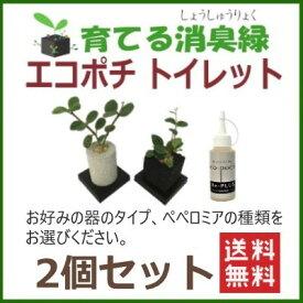 ペペロミア 消臭 観葉植物 インテリアグリーン グリーン えこぽち エコポチ トイレット 2個セット 育てる ミニ観葉 トイレ専用 送料無料 eco-pochi