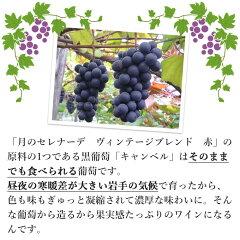 プレゼント女子に人気飲みやすい甘口赤ワインエーデルワイン月のセレナーデ赤ワイン甘い女子会日本ワイン国産ワイン