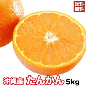 タンカン 5kg 今が旬の沖縄たんかん!沖縄が誇る最強柑橘フルーツ!たんかん発売記念!今年限りの特別価格! |果物 |【2月上旬〜順次発送・日時指定できません】
