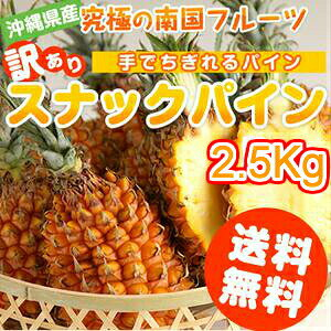 【予約販売】スナックパイン 送料無料 沖縄県産 2.5kg(2〜5玉)産地直送 フルーツ 果物(パイナップル)(お土産) 沖縄土産 通販 ご当地 訳あり スイーツ (ギフト)|パイン|【5月下旬から6月中旬発