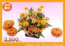 10月の誕生花★ビタミンオレンジアレンジ3,500円【送料無料】【ガーベラ】花言葉カード付き【写真付きメッセージ選択可】【あす楽対応】