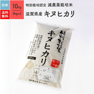 特別栽培米 令和元年産 滋賀県産 キヌヒカリ 米 10kg 送料無料