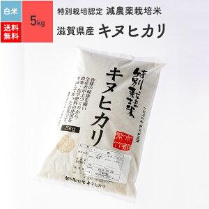 特別栽培米 令和元年産 滋賀県産キヌヒカリ[白米 5kg 送料無料]特別栽培米(減農薬)