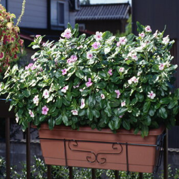 ベランダやフェンスに花が飾れる!*フラワーエンゼルST型No.250*引っ掛けるだけでOK!【ガーデニング花園芸鉢フラワーアレンジメント】