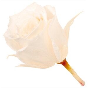 ビビアン 24輪 ホワイトシャンパン 76-2370-21 プリザーブドフラワー バラ ローズ 薔薇 大地農園 ブーケ リース アレンジ ハーバリウム 松K直送