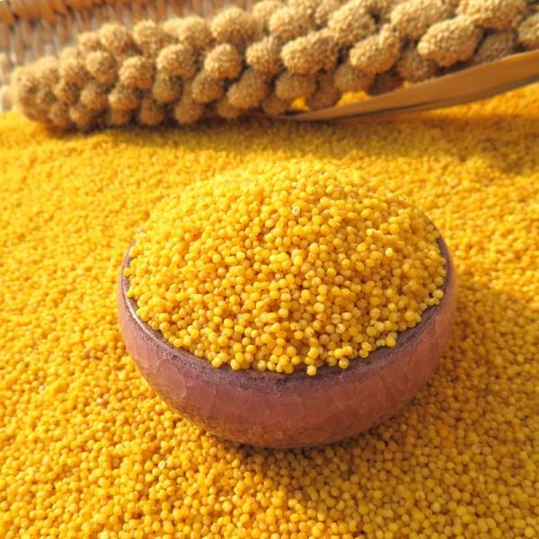 黄小米(アワ・粟) 低カロリー高穀物繊維の主食材料 緑色食品・健康栄養食材・人気商品 400g