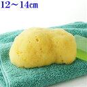 洗顔 ボディ洗い【敏感肌にやさしい】究極の柔らかさ海綿スポンジ最高級シルク種M乾燥時12〜14cm(お水で膨らみます)ライトイエロー色送料無料