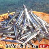 甑島のきびなご塩干し1kg【送料無料】鹿児島産干物国産こしき島新鮮な干物おつまみキビナゴきびなご